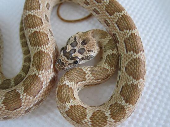 ミケヘビ②1