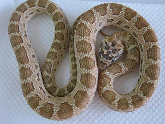 ミケヘビ②2