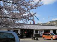 山田屋桜と鯉幟