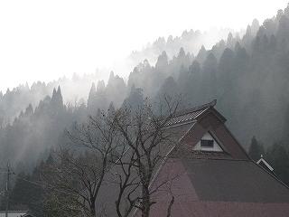 20100328生杉 011