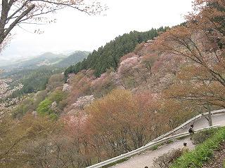 20100414吉野山 014