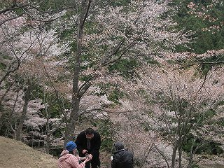 20100414吉野山 008