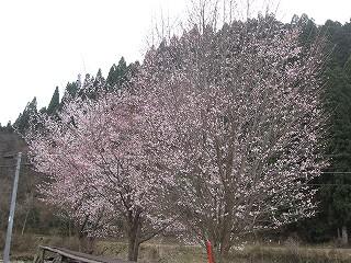 20100418生杉 041