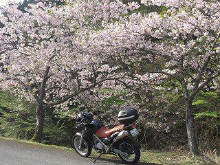20100505バイク 015