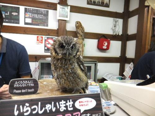 富士花鳥園♪