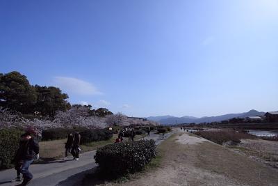 20100328_22.jpg