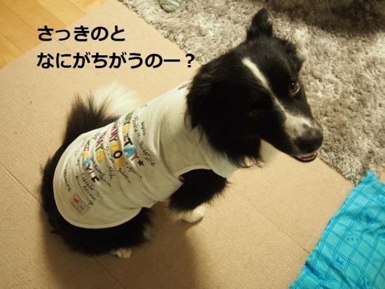 20140921_11-1.jpg