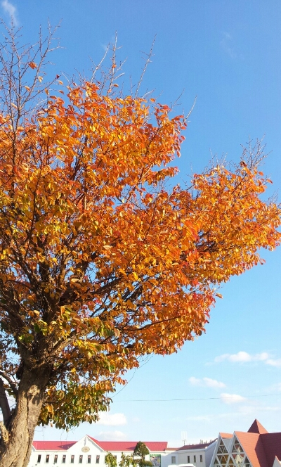 fc2_2014-10-27_00-19-49-581.jpg