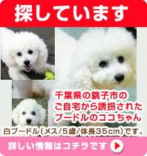maigo_koko1.jpg