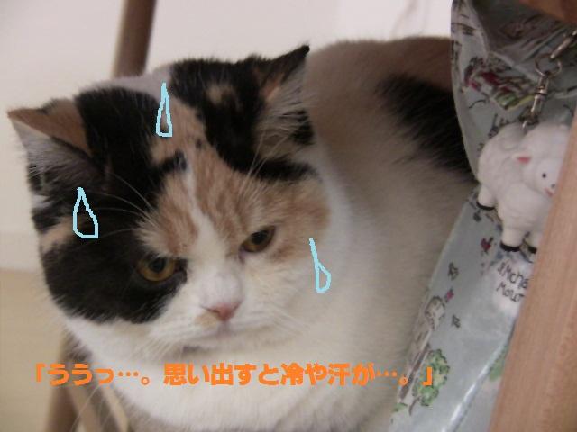 IMG_5023まめ2