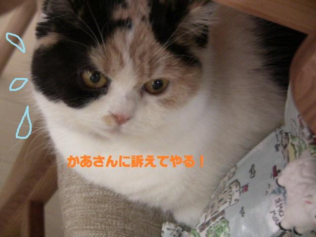 IMG_5022まめ1