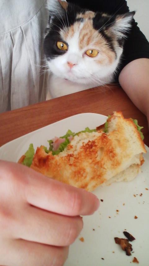 パン食べたいにゃ