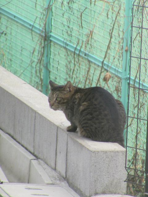 外猫ちゃん