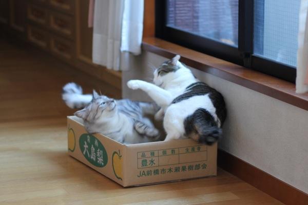 tatakusora3.jpg