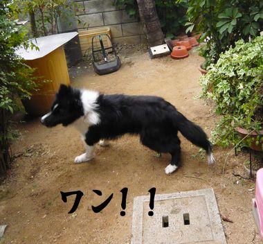 201105034.jpg
