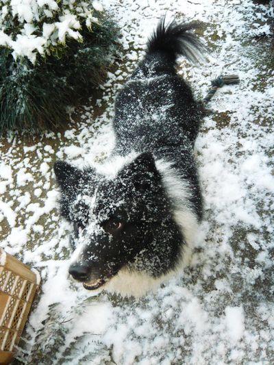 セト初めての雪体験2