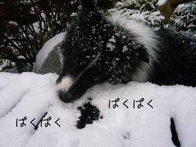 セト初めての雪体験!1