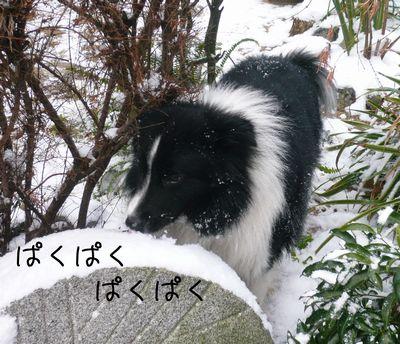 セト初めての雪体験!2