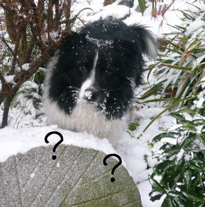 セト初めての雪体験!4