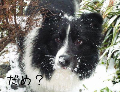 セト初めての雪体験!5