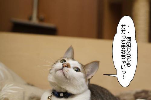 1_20110620111108.jpg