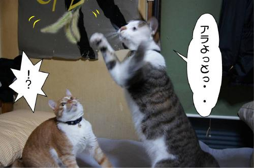 2_20110620111108.jpg