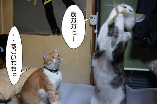 5_20110620111107.jpg