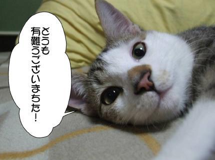 8_20110528171037.jpg