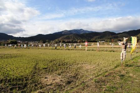 嵯峨野の案山子_H26.12.07撮影