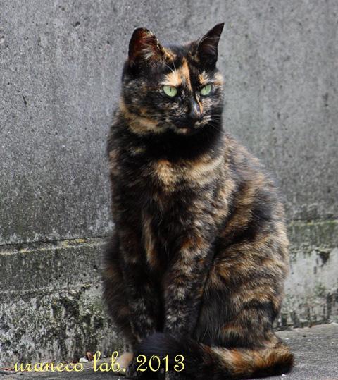 2月21日猫祭り用3