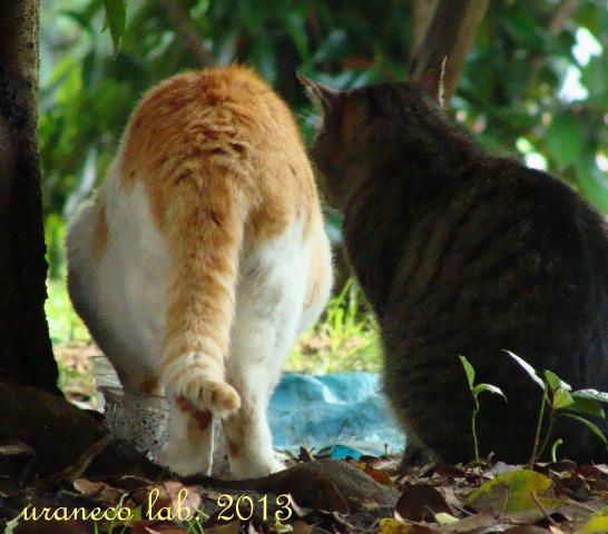 2月21日猫祭り用6