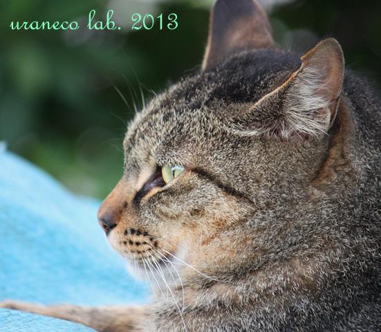 2月21日猫祭り用11