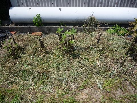 刈り草を特盛しました~