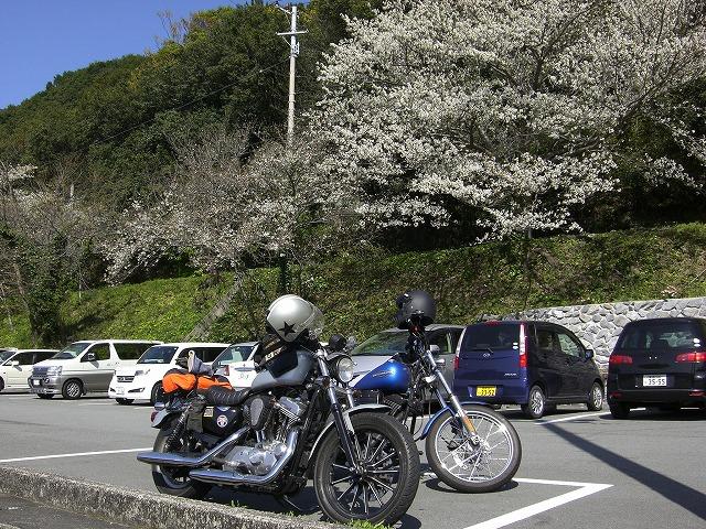 s-2010.3.21桜14:25