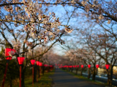 s-6:42桜