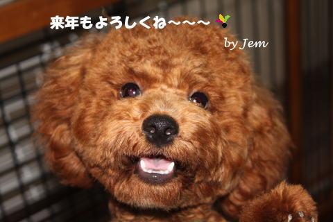 aisatu2012.jpg