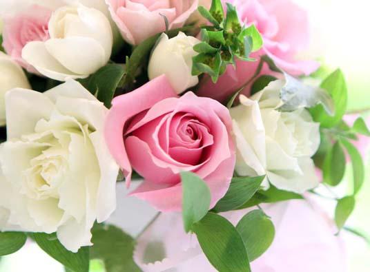 プルメリア お花