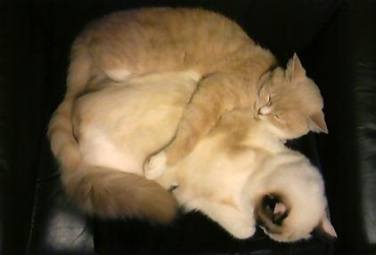 二匹 寝顔