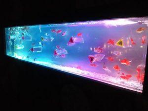 金魚展_10