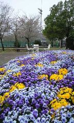 花壇共愛①