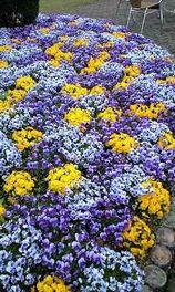花壇共愛②