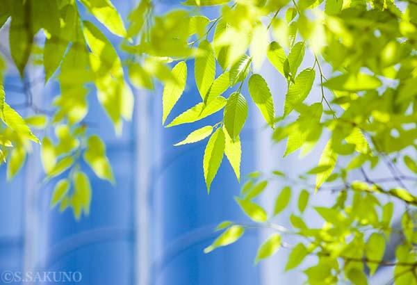 新緑SS_52077 のコピー