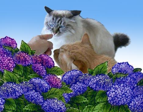 ajisaito_20100619202345.jpg