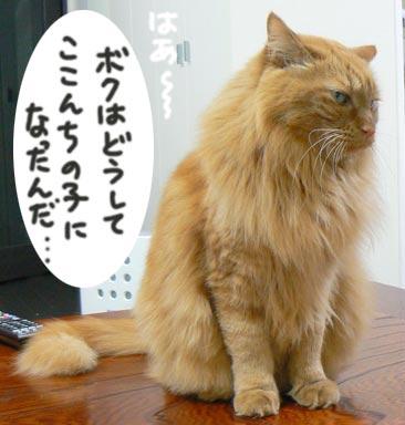 fufun_20100412123807.jpg