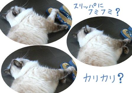 fumifumi_20101013112845.jpg