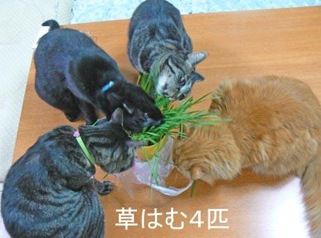 hamuhamu_20100509162704.jpg