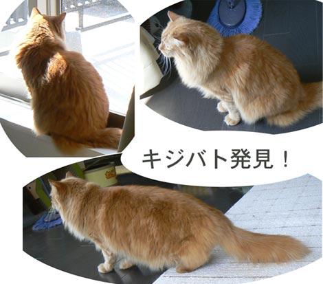 hatototyao.jpg