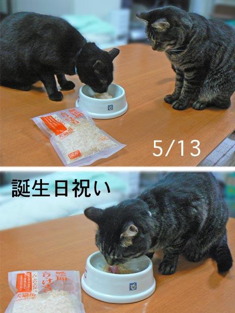 iwai_20100515180639.jpg