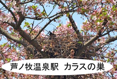 karasunosu.jpg