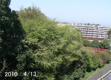midori_20100413211309.jpg